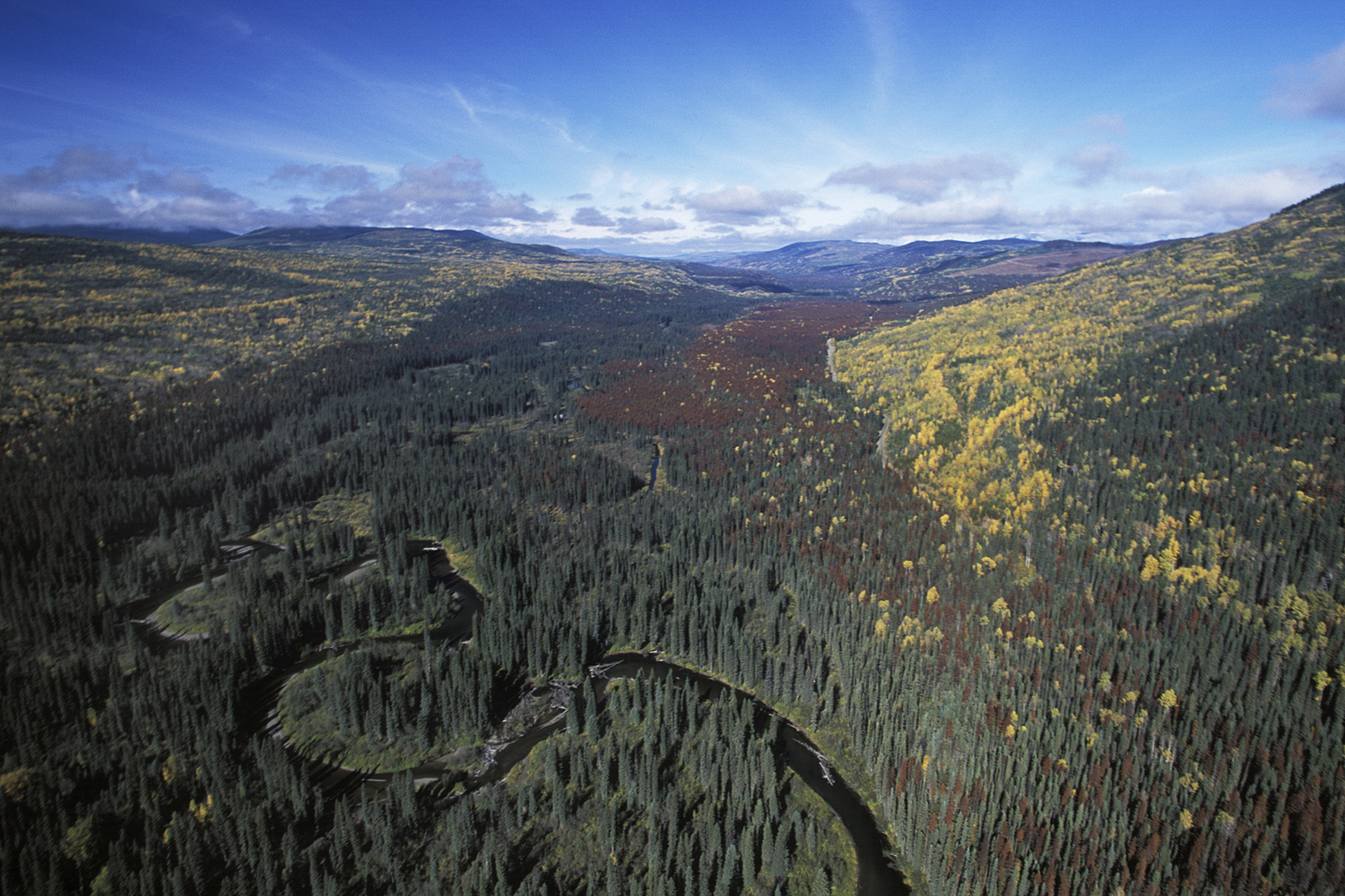 term paper on forest resource management Both short- and long-term opportunities for incorporating itk in forest management use planning, natural resource management, co-management, parks and protected forest management in canada.